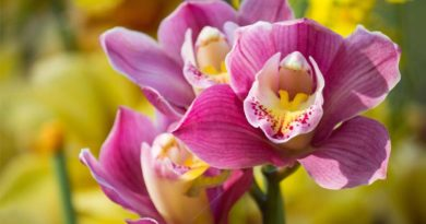 Fim de semana no Jequitibás tem feira de orquídeas e suculentas