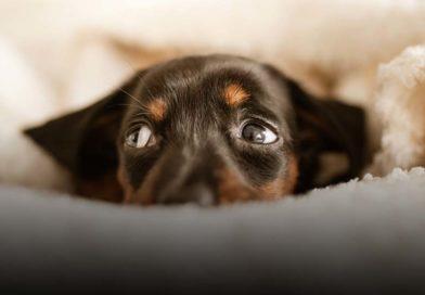 Primeiros socorros dos pets: Como proceder?