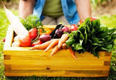 11 alimentos que fortalecem sua imunidade