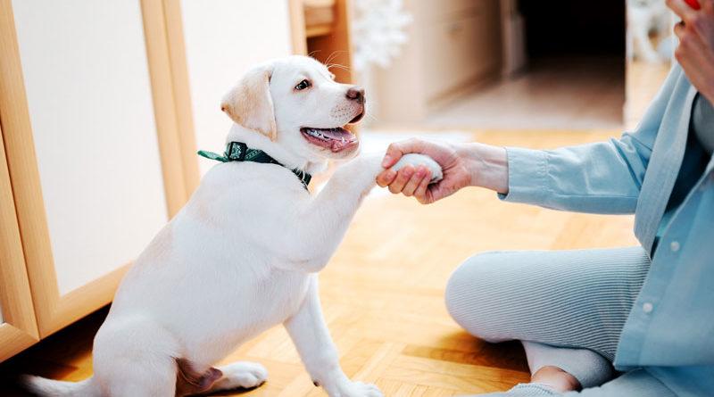 4 maneiras de mudar o comportamento do seu cão