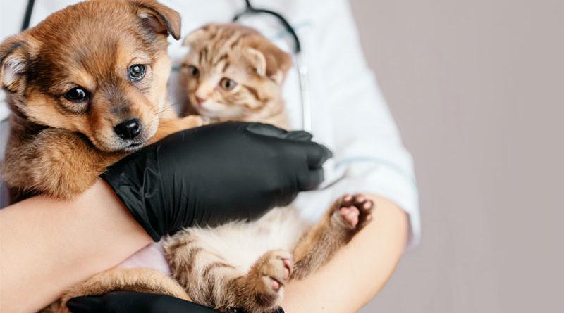 Raiva canina e felina